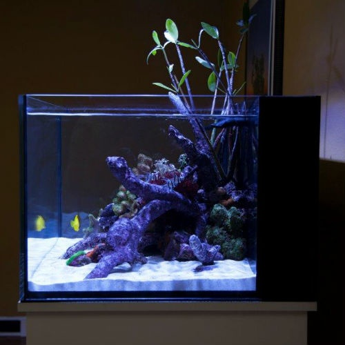 Innovative Marine Nuvo Fusion 50 Gallon Lagoon Tank & High Gloss WHITE ...